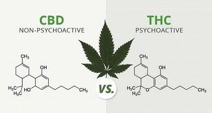CBD non phsycoactive