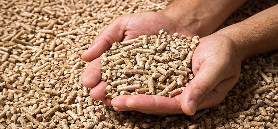 buck pellets